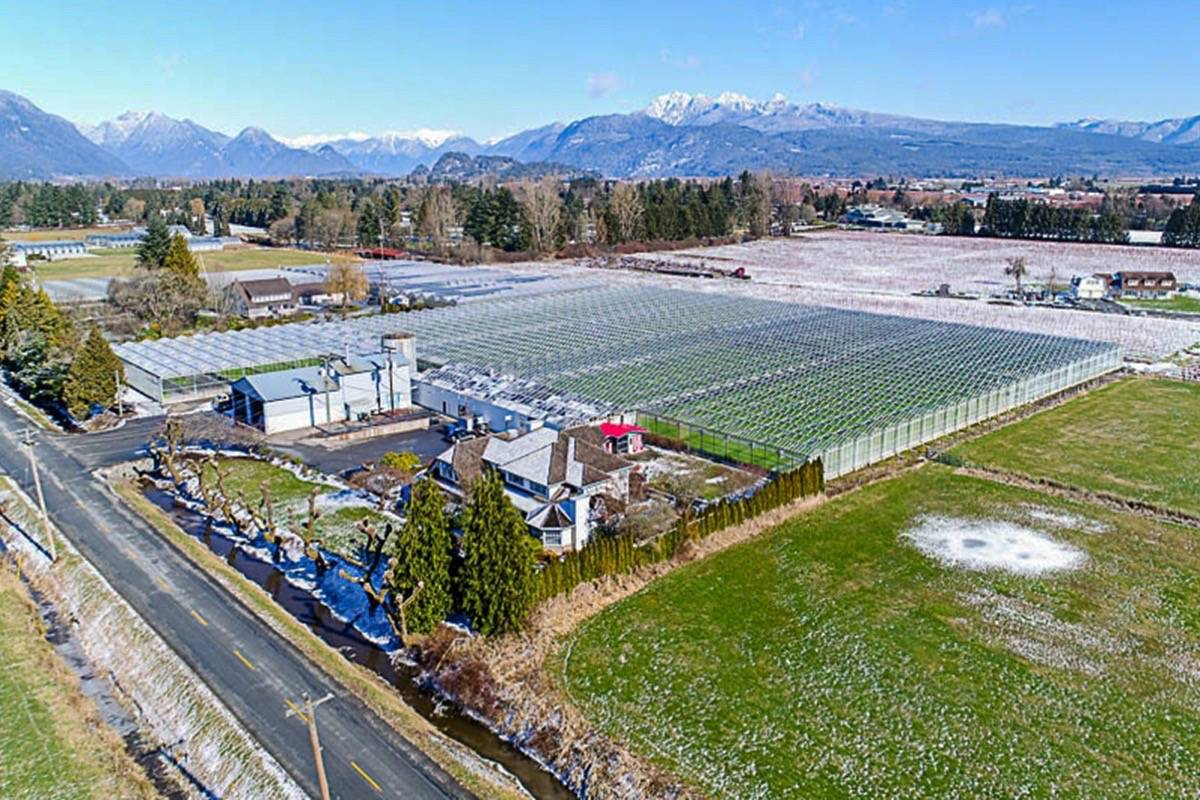 New pot greenhouse sprouting in Pitt Meadows