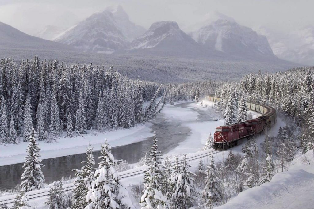 Study finds train speed a top factor in wildlife deaths in Banff, Yoho national parks - Maple Ridge News