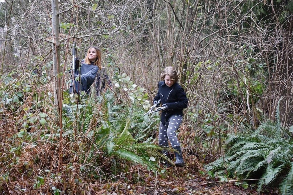 Environmental students remove invasive species from Maple Ridge Park - Maple Ridge News