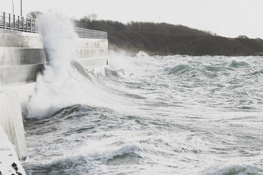 Bounty of the Sea - Maple Ridge News