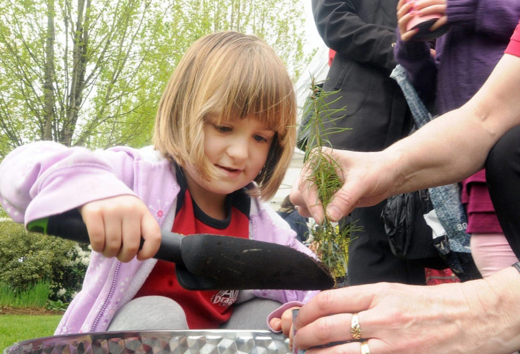 Tree planting in Pitt Meadows park for Earth Day - Maple ...