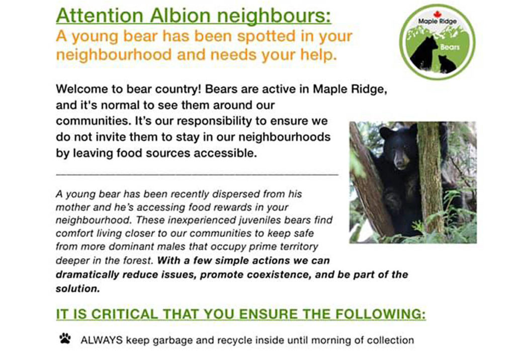 Young bear in Albion needs help to survive - Maple Ridge News