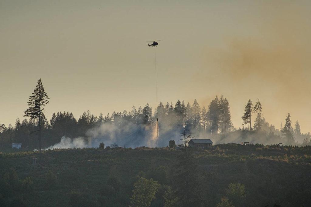 800 Christmas trees burn in fire at Nanaimo tree farm - Maple Ridge News